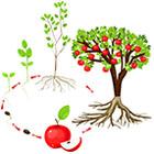 Atelier_Cours de botanique cycles de vie