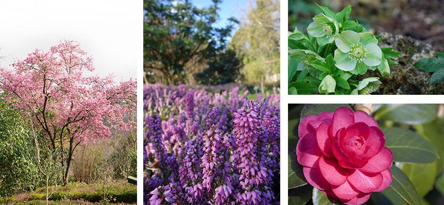 Jardin d'hiver - Jardin botanique de Lyon