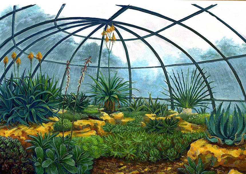 Illustration plantes d'Afrique du Sud