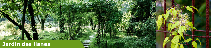 slider jardin des lianes