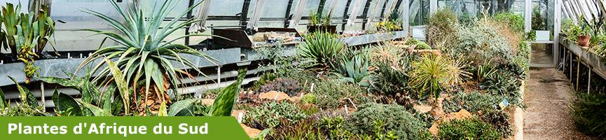 slider plantes d'Afrique du Sud