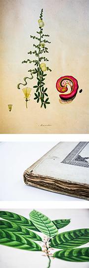 Collection_bibliothèque