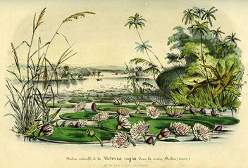 ILLUSTRATION -victoria belize.jpg