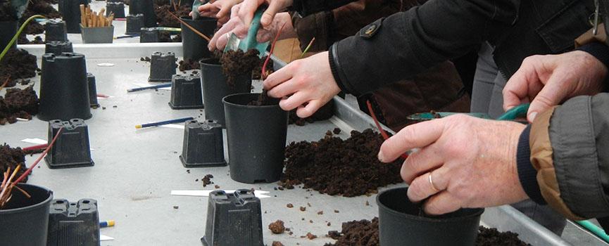 Atelier de bouturage de plantes carnivores
