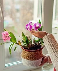 ILLUSTRATION- soigner orchidée