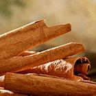 LOGO - Cinnamomum_verum