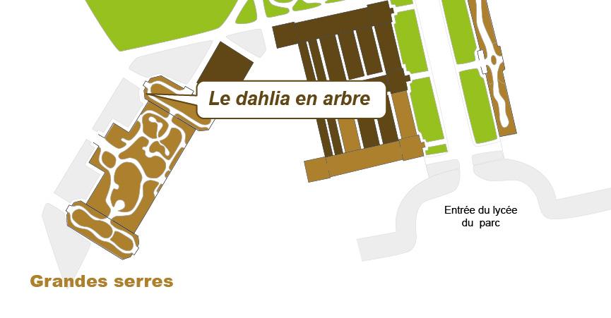 Plan_web Dahlia imperialis