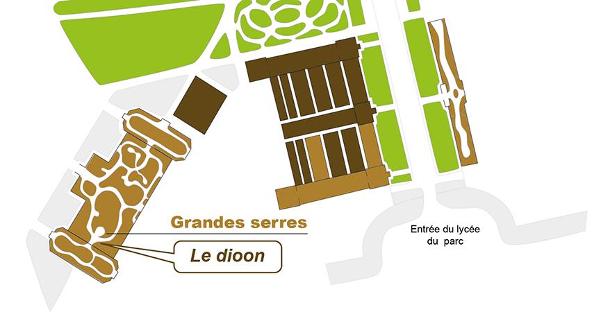 Plan_web- Dioon mejiae-01.jpg