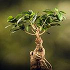 La plante du moment