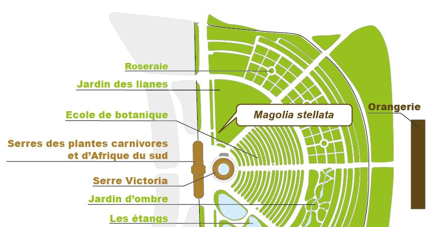 Plan_web - Magnolia