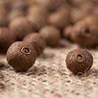 LOGO - Pimenta dioica © Adobe stock - GreenArt.jpg