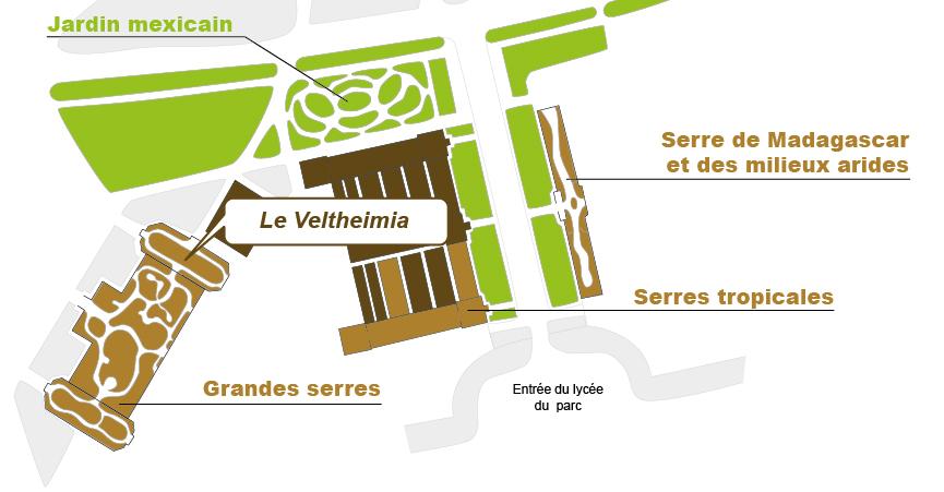 Plan_web- veltheimia
