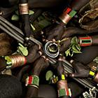 LOGO - Plantes sacrées d'Afrique - ©AdobeStock_veleknez.jpg