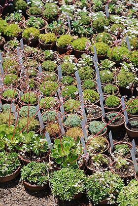 Evolution des missions d 39 un jardin botanique au fil du - Jardin botanique de lyon ...