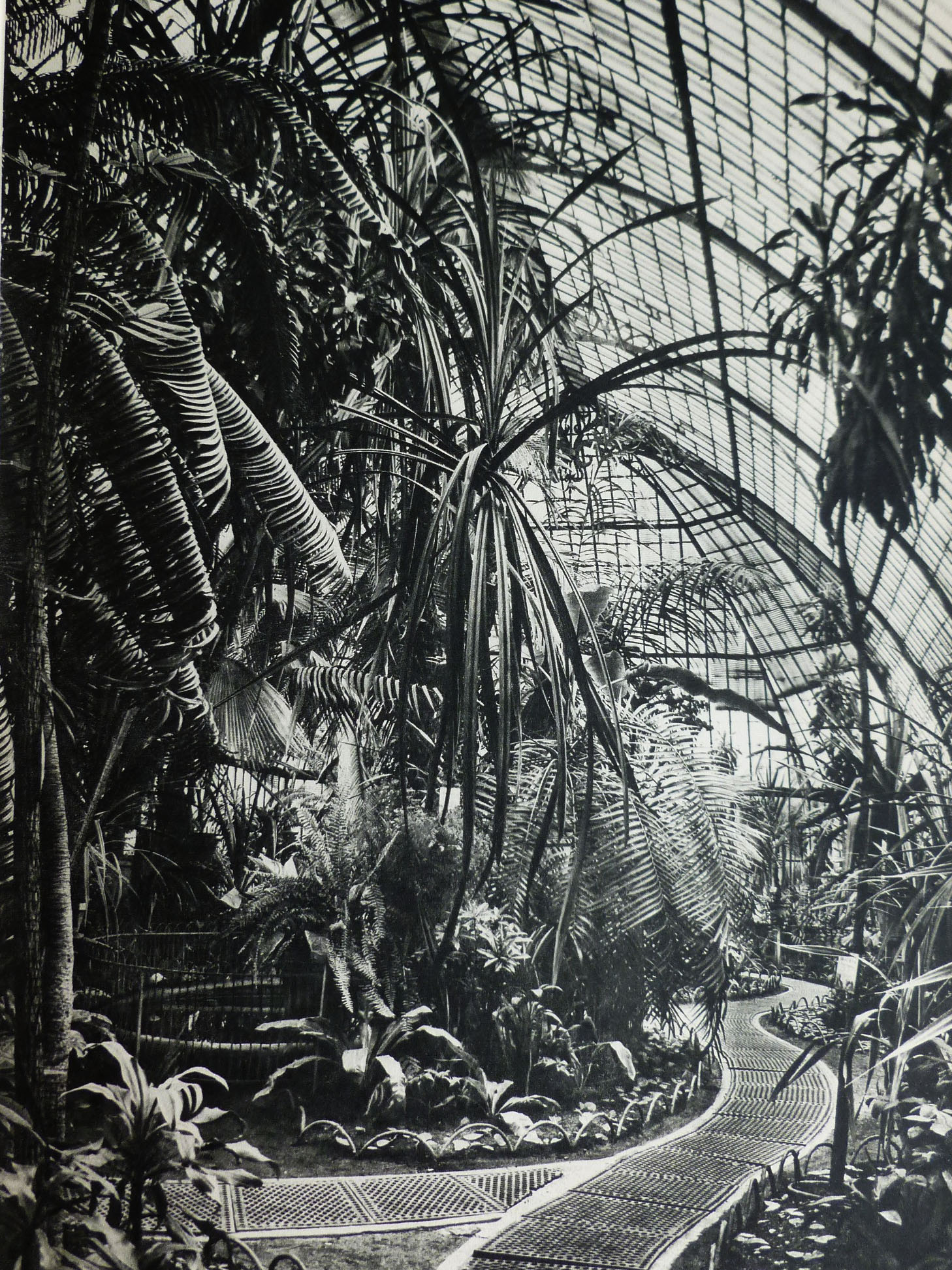 Exposition des plantes des colonies