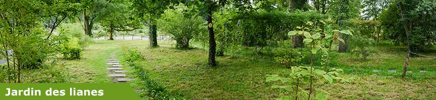 slider_jardin_des_lianes.jpg