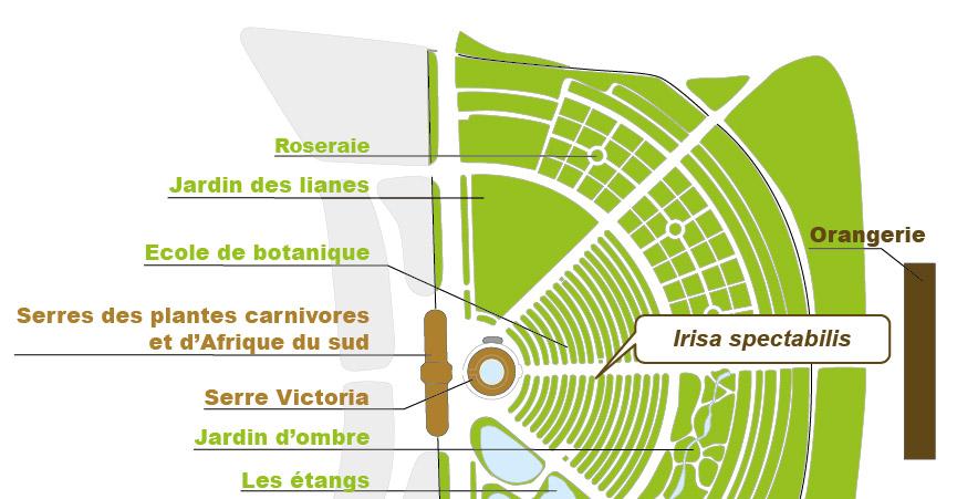 Plan_web -  Irisa spectabilis