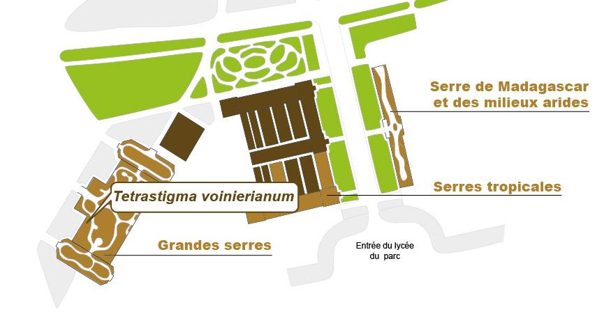 Plan_web - TETRASTIGMA-01.jpg