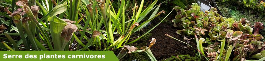 slider plantes carnivores