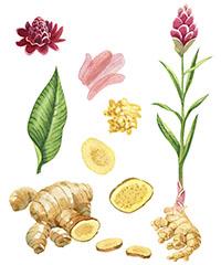 ILLUSTRATION - cours de botanique