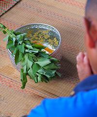 Plantes sacrées d'Asie