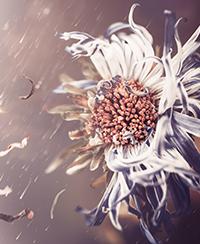 La fleur ephemere