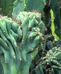 ILLUSTRATION - PLANTES SPECTACULAIRES