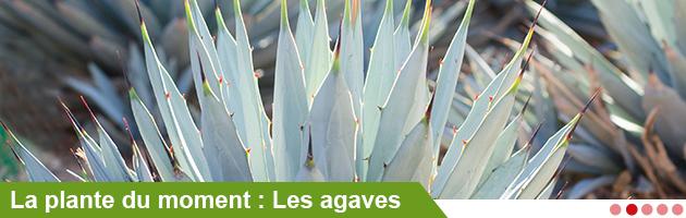 Jardin botanique de lyon france ankryan annuaire - Jardin villemanzy lyon lyon ...